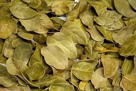 Boldo depurazione fegato pianta depurativa