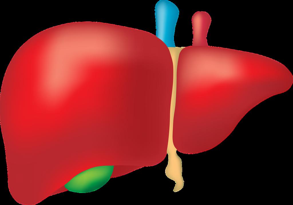 depurazione fegato