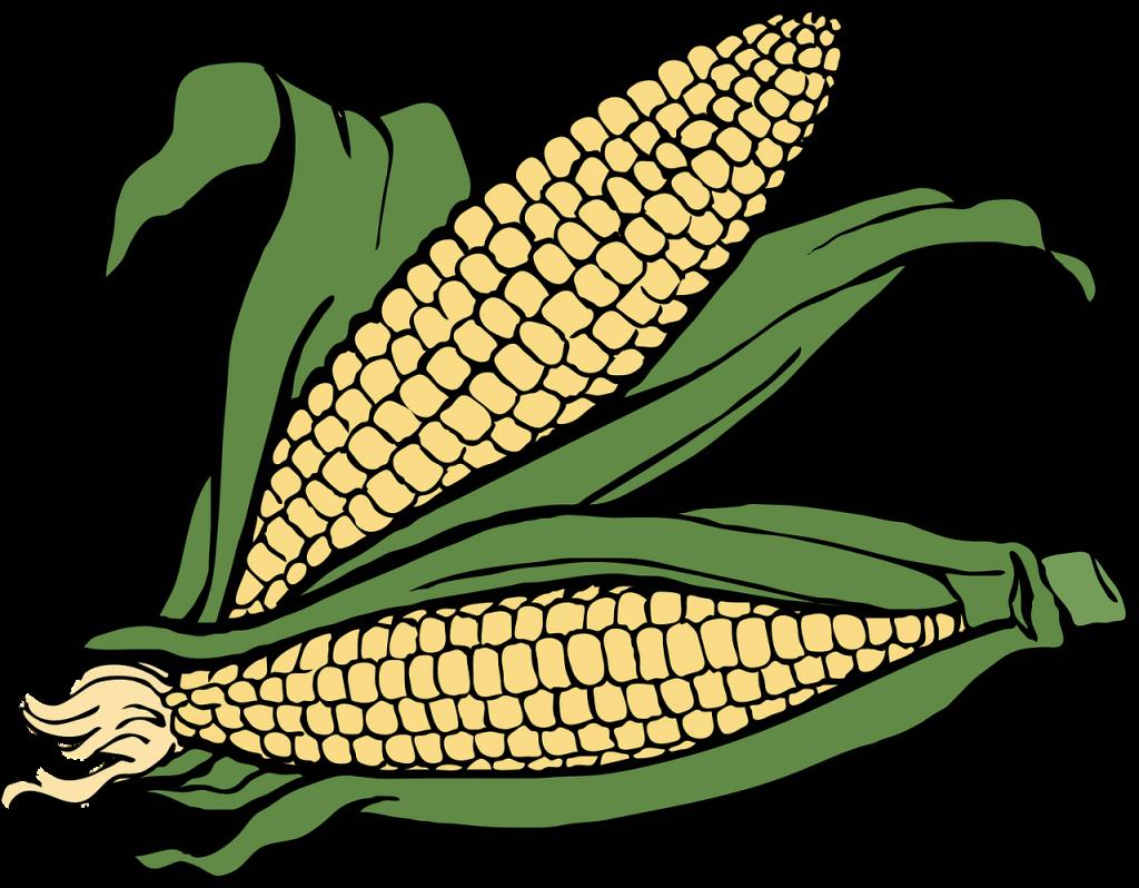 corn, cob, ear
