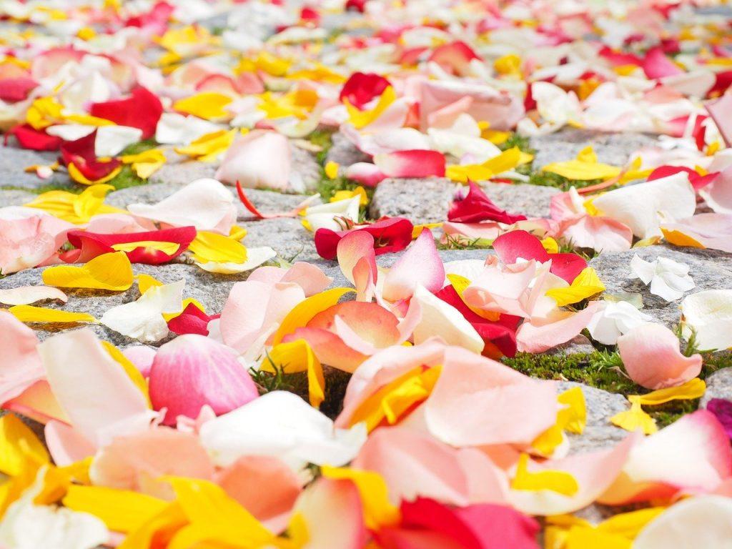 rose petals, petals, wedding
