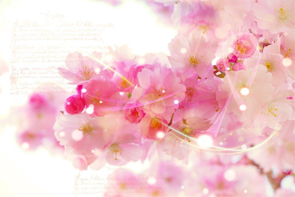 japanese cherry trees, font, romantic