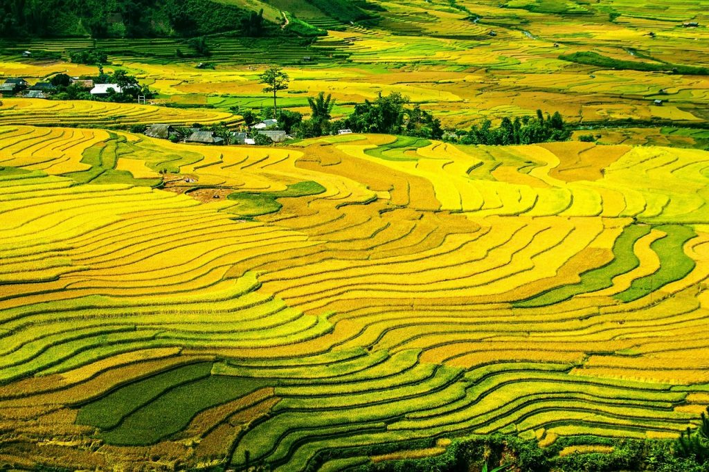 rice terraces, rice fields, paddy