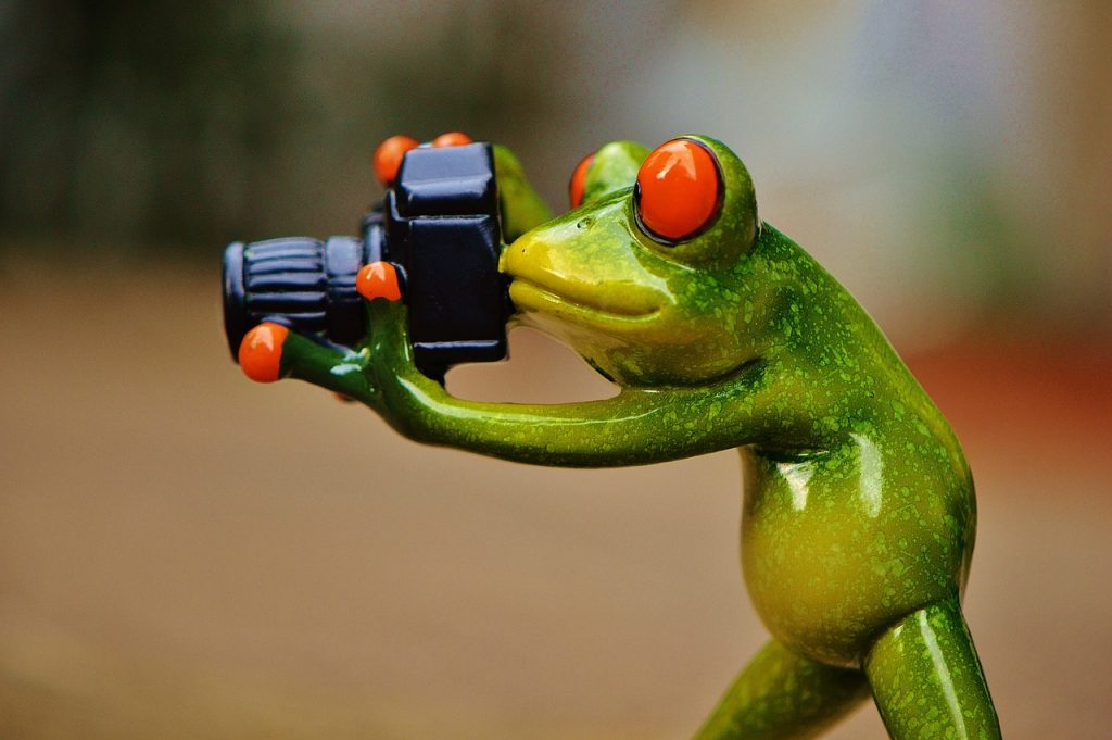 frog, photographer, funny