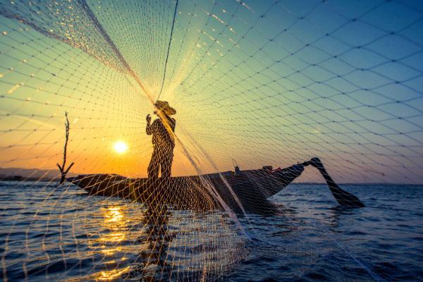 quale è il posto migliore per un pesce